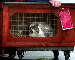 Bunny rabbit gets parking ticket
